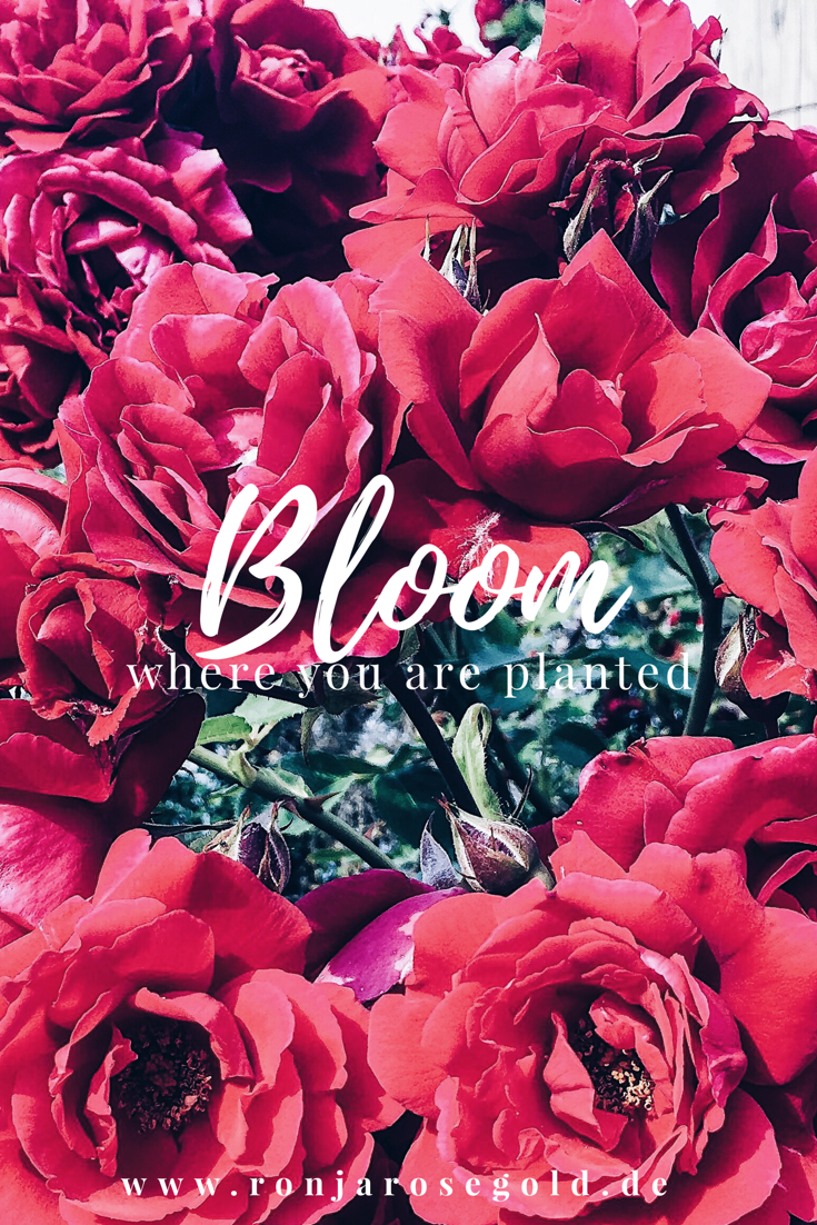 Bloomy Wallpaper